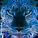 Blue_Leppard