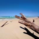 AussieD's Avatar