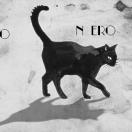 GattoNero