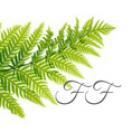 Finding_Ferns
