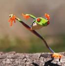 ninjafrog