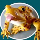 Videos_Froggy's Avatar