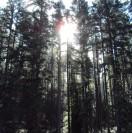 wildwoodmedia