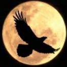 phoenix_recordings