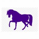 PurpleHorse
