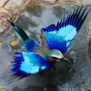 BlueBird001