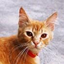 In_Red_Cat