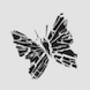ButterflyFracture