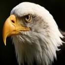 eagleyevfx