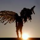 angeloider