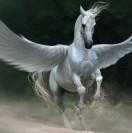 PegasusOnFire