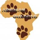 AfricanWildcat