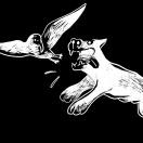 doghuntsgullfilms's Avatar