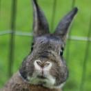 Rabbitti