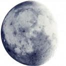 shoot_the_moon's Avatar