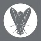 Studio_Fly