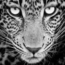 CreativeWILD_Africa