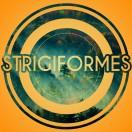 Strigiformes's Avatar