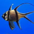 FishSongs